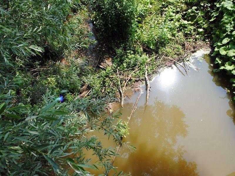 Фотография в Кармаскалинском районе: Бобровая плотина в Бузовьязах