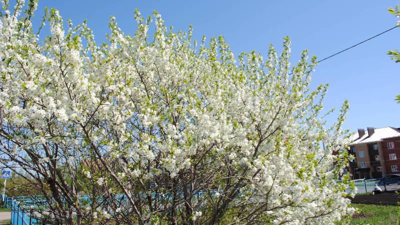 Фотография в Кармаскалинском районе: Весна в Кармаскалах
