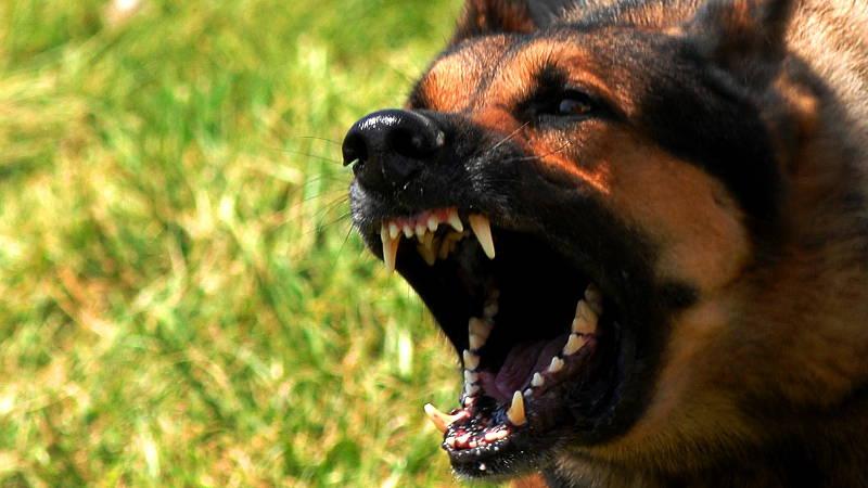 Смерть, убегая от собаки