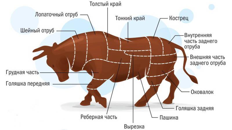 Застрелили быка