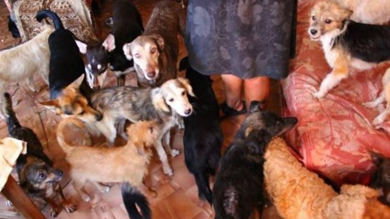 40 собак в 1 квартире
